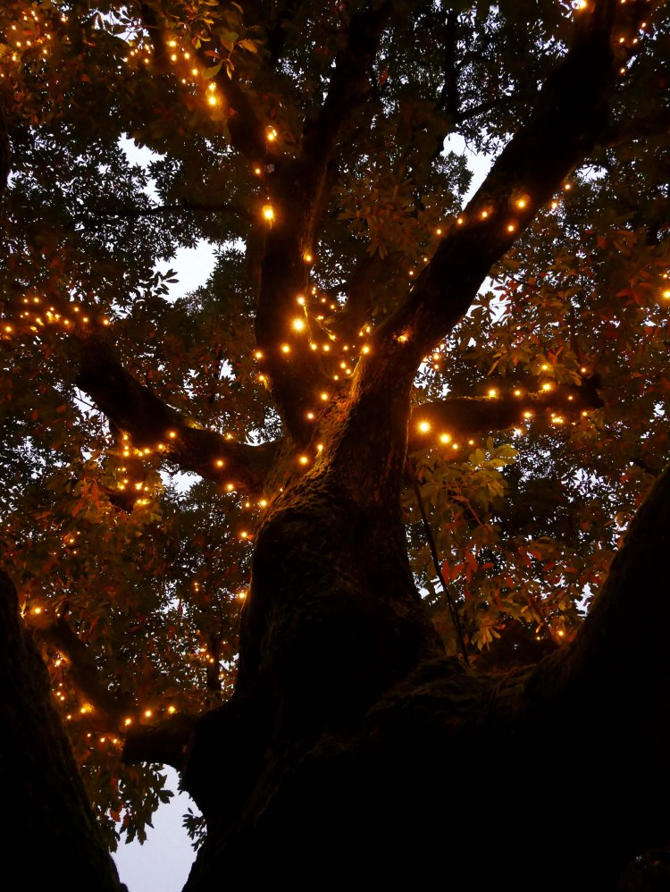Autumnal tree with fairy lights in the botanical garden Hortus Botanicus in Amsterdam - the Netherlands