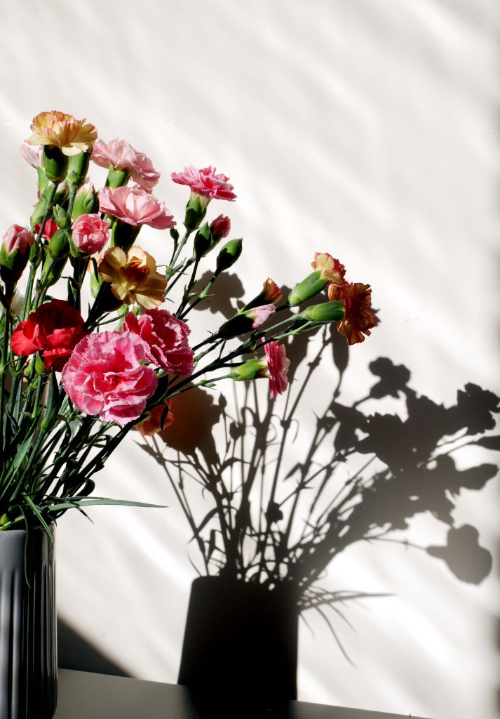A bunch of colorful carnation flowers and its shadow on a white wall on a sunny day