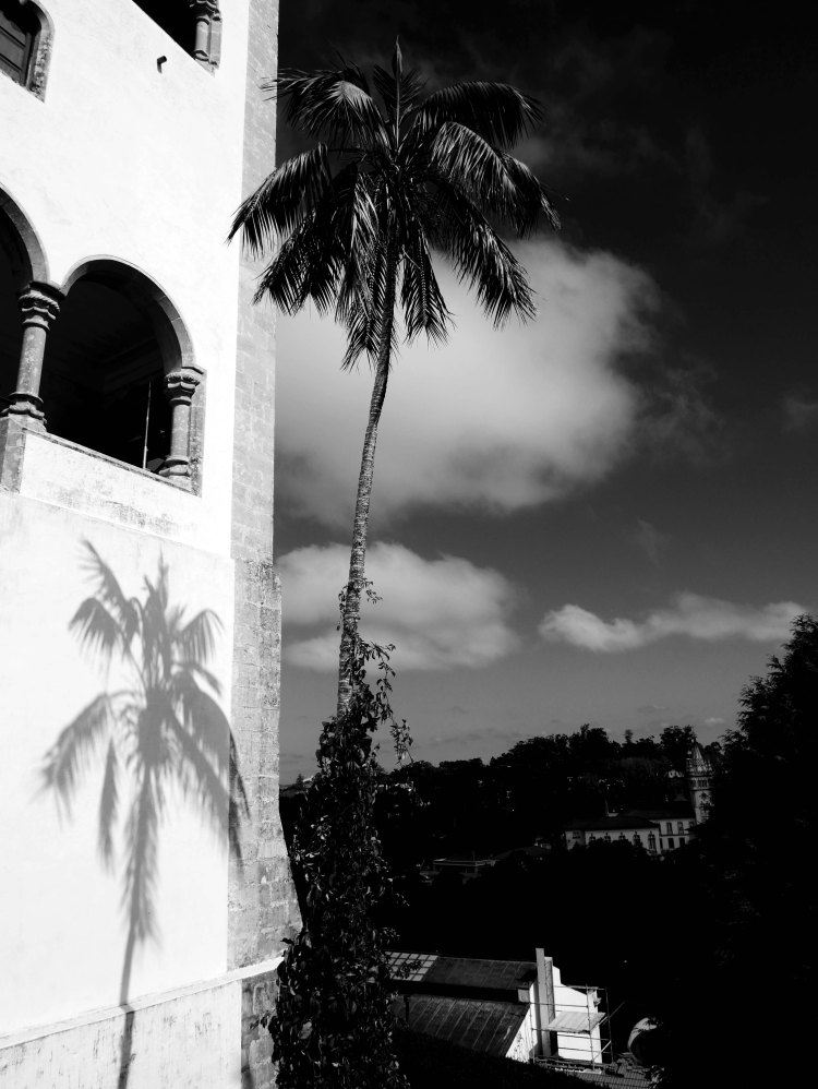 A palm tree and its shadow on a white wall , white clouds in the sky
