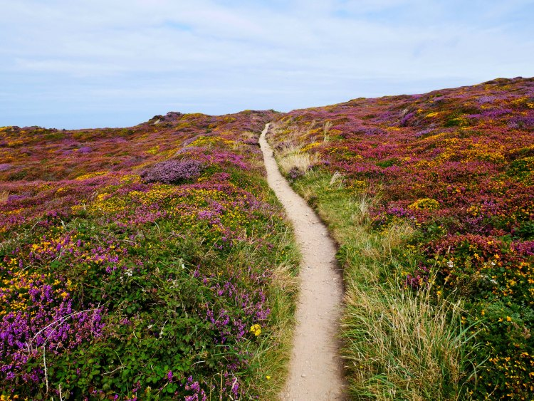 iew of an hiking path surrounded by yellow, pink, purple and green bushes in St Agnes - England