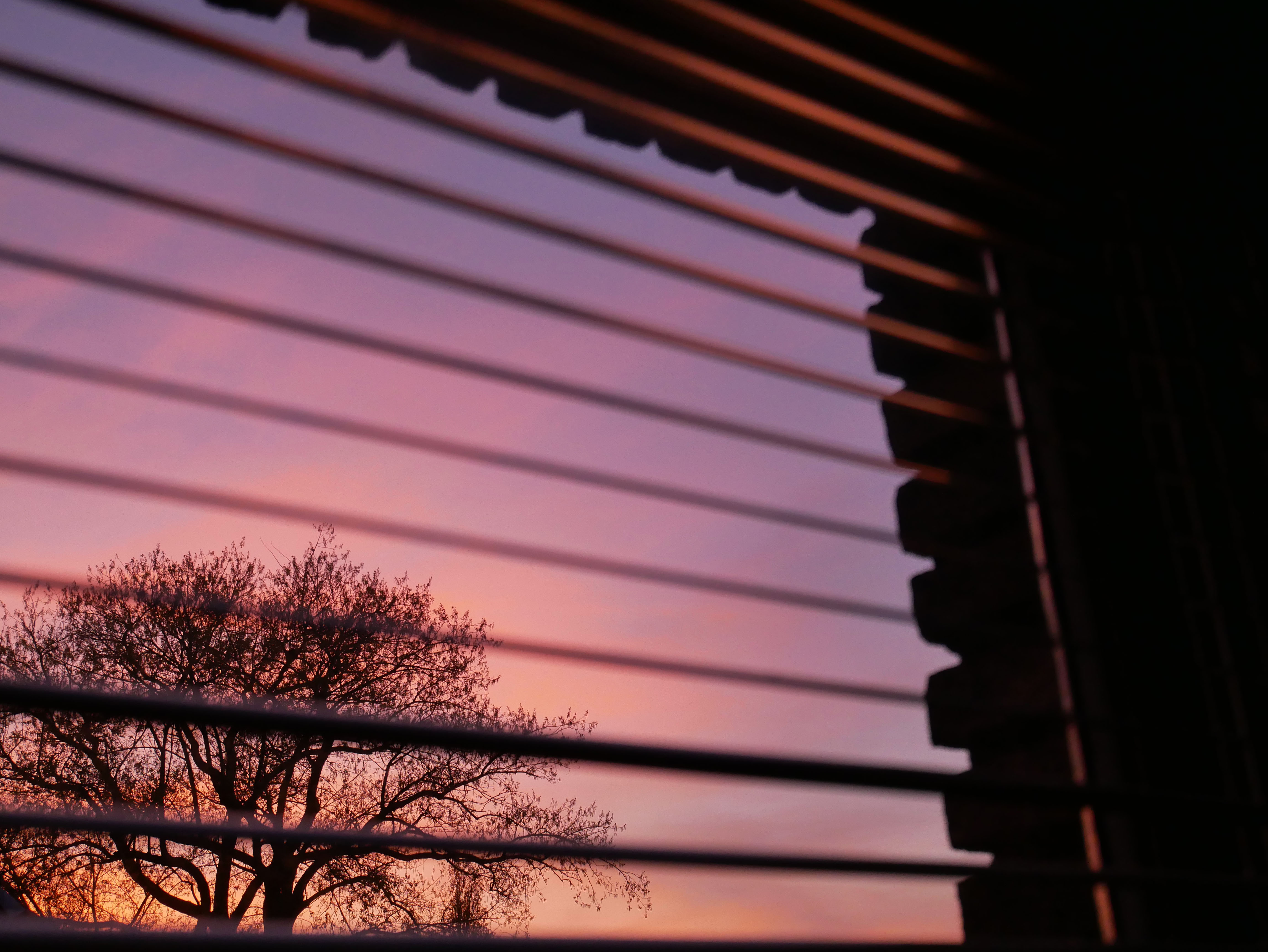 Window view through blinds of a tree and sunset-colored sky