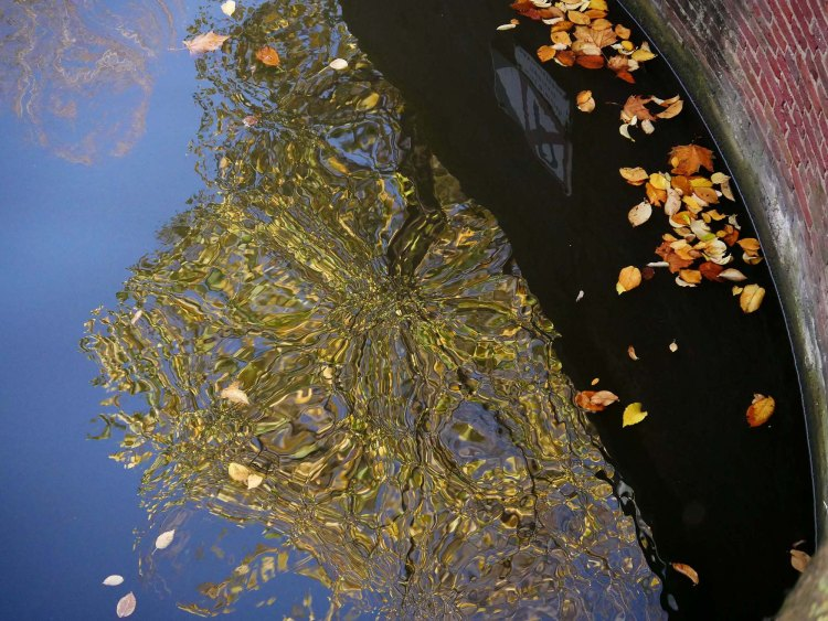 Reflection of a tree on an Amsterdam canal, some brown leaves floating around