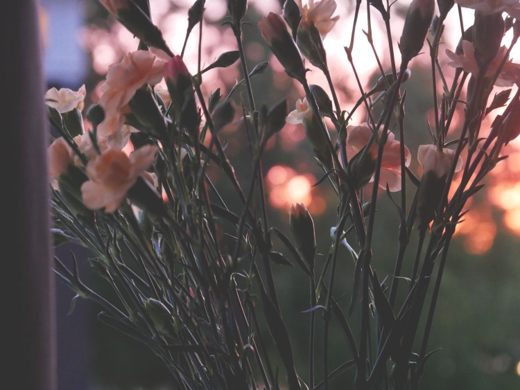 Bunch of pink and orange flowers with a sunset bokeh in the background.