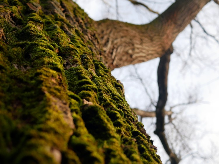 Details of a green trunk